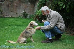 Shaking paws with a dog