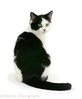 Black-and-white cat looking over its shoulder