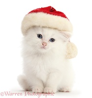 White kitten wearing a Santa hat