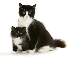 Black-and-white cat and kitten