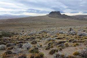 Rugged Patagonia landscape