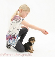 Girl playing with Yorkie-cross pup