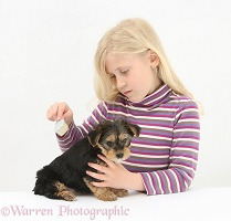 Girl brushing a Yorkie-cross pup