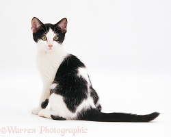 Black-and-white kitten looking over its shoulder