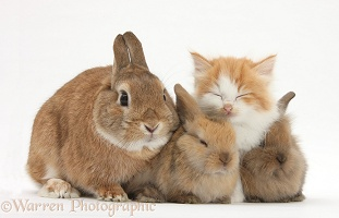 Kitten and bunny rabbits