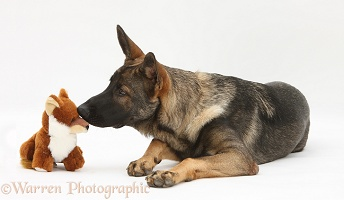 Alsatian and soft toy fox