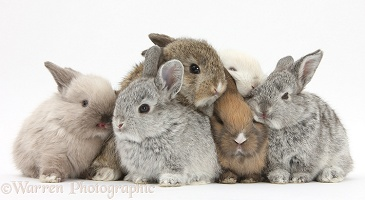 Six baby rabbits