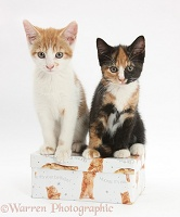 Kittens on a box