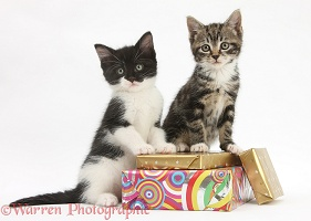 Kittens on birthday parcels