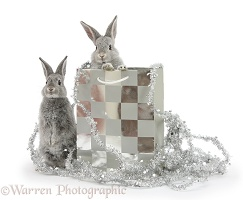 Two baby silver rabbits in a gift bag with Christmas tinsel