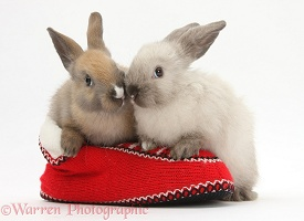 Young rabbits in a knitted slipper