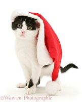 Black-and-white kitten wearing a Santa hat