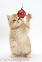 Ginger kitten playing with Christmas bauble