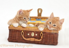 Ginger kittens playing in a wicker basket case
