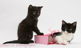 Kittens playing with birthday gift bag