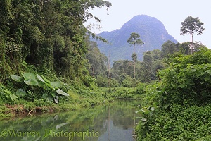 River in tropical forest