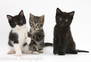Three kittens together