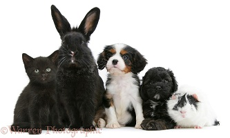 Black-and-white pet lineup