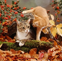 Cat with ginger kitten among autumn leaves