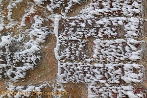 Rime-covered brick and stone wall