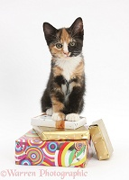 Tortoiseshell kitten sitting on birthday parcels