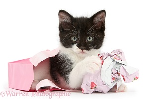 Black-and-white kitten playing with gift bag and wrap