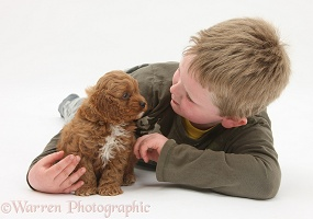 Boy with Cockapoo pup