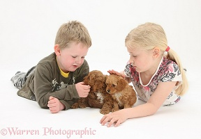 Children with Cockapoo pups