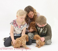 Family with Cockapoo pups, 7 weeks old