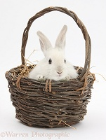 Baby white rabbit in a wicker basket