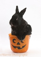 Black rabbit in a Halloween bucket