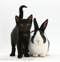 Black kitten and Dutch rabbit