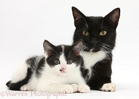 Black-and-white mother cat and kitten