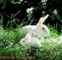 White rabbit and baby among flowers