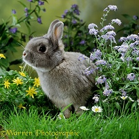 Dwarf rabbit among flowers