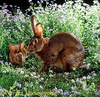Brown rabbits and flowers