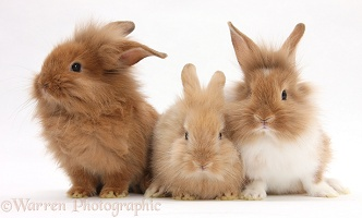 Three assorted Sandy rabbits