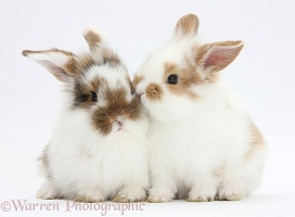 Young rabbits snuggled together