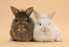 Baby rabbits on beige background
