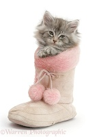 Maine Coon kitten in a pink furry boot