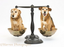 Weighing the pros and cons of dog rescue