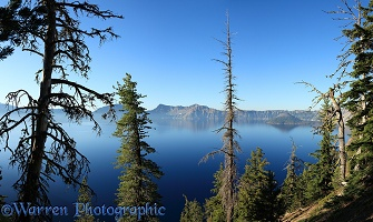 Mountain Hemlock trees and Crater Lake