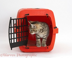 Tabby kitten in a cat carrier