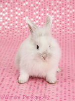 Cute baby white bunny, sitting on starry background