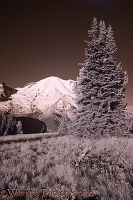Mount Rainier photographed in near infrared