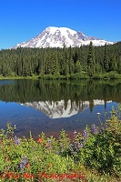 Mount Rainier reflected in a lake