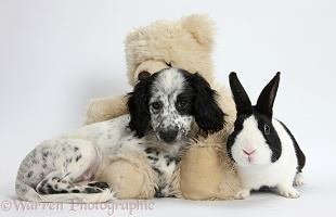 Black-and-white puppy, teddy bear and rabbit