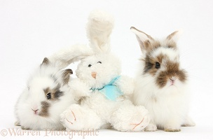 Baby bunnies with soft toy rabbit