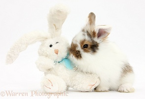 Baby bunny with soft toy rabbit