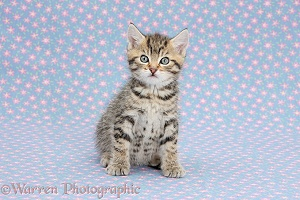 Cute tabby kitten on flowery background
